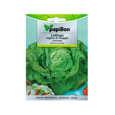 Seeds of Queen of May Lettuce 7g